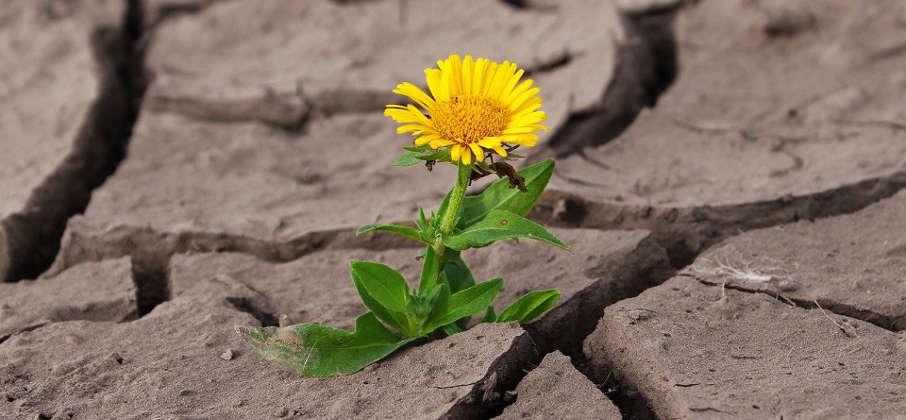 Blume aus Erdkruste